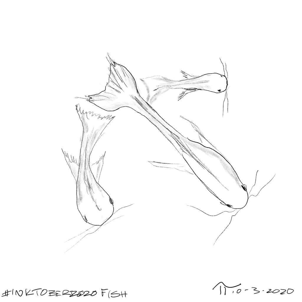 Sketch of 3 Koi