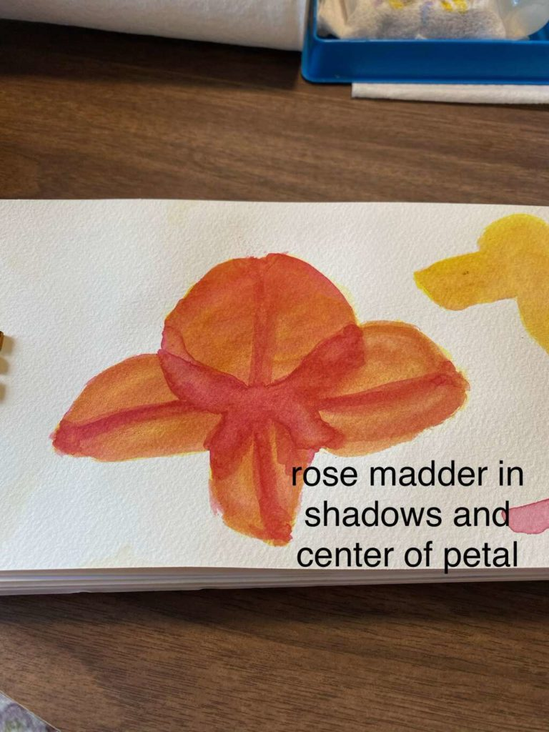 Adding more rose madder for the overlapping petals