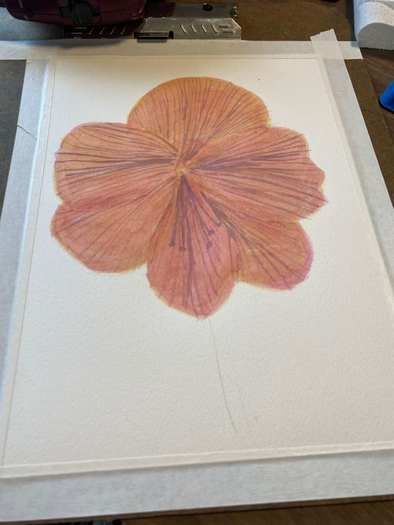 2 layers of aureolin and 2 layers of rose madder over veins on flower