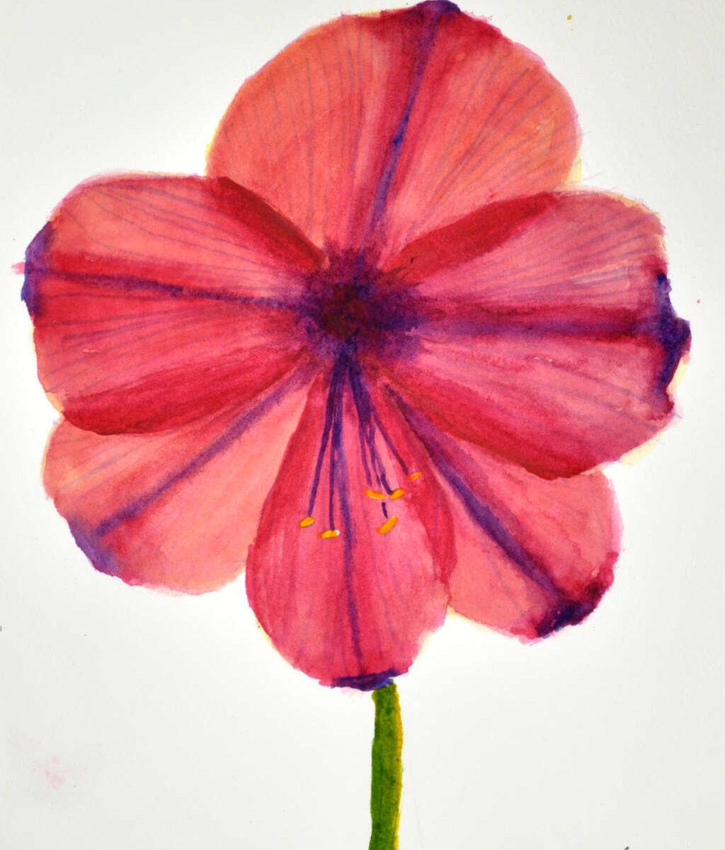 Final version of painting of amaryllis