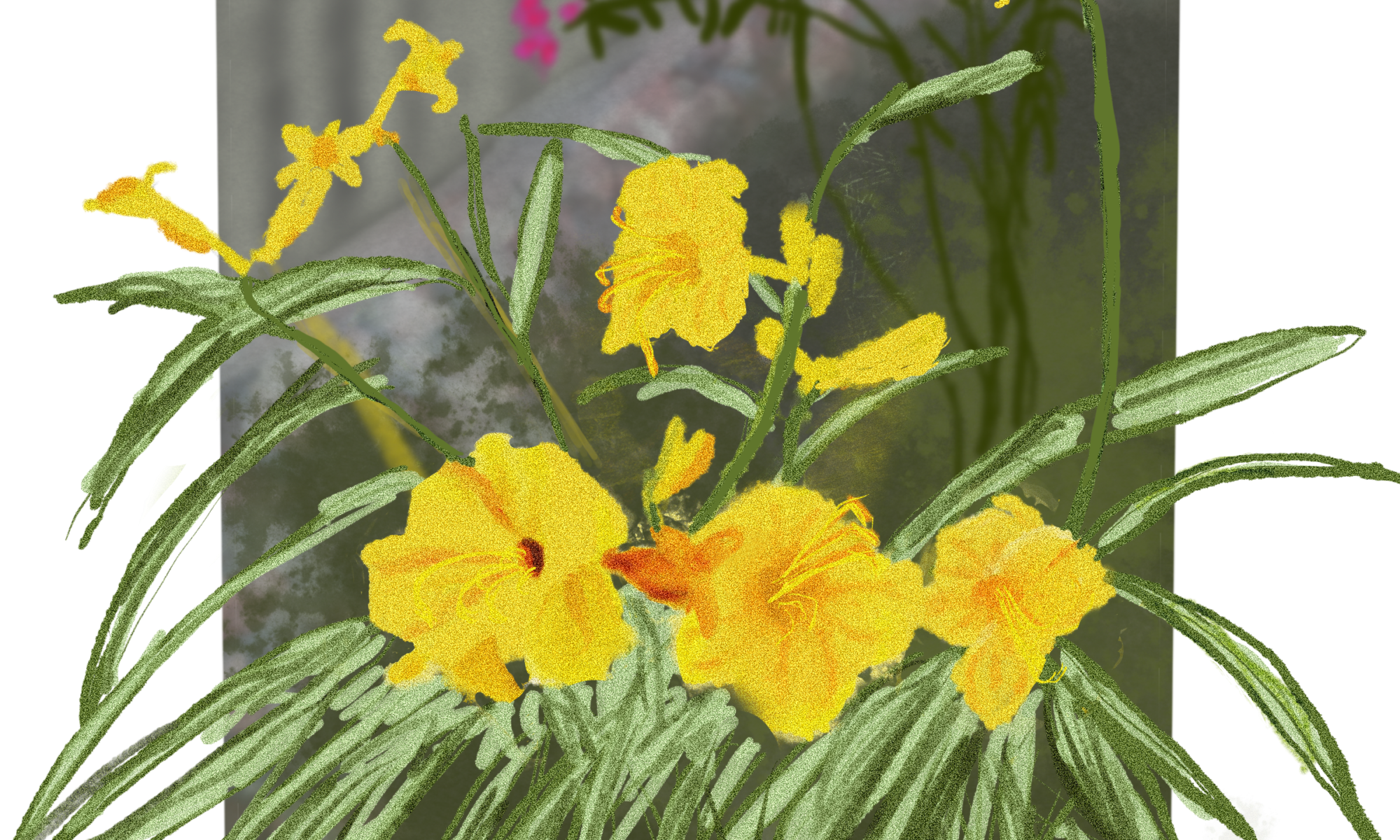 digital painting of a cluster of 3 stella d'oro flowers, with some more behind it and some tiny pink flowers further in back, all within a white mat. there's an illusion of the leaves of the stellas popping out of the frame